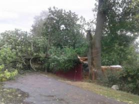 У Корці на вулиці Українських Повстанців дерево пошкодило лінію електропередач