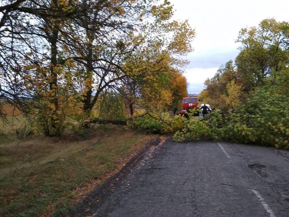 Дерево заблокувало транспортний рух