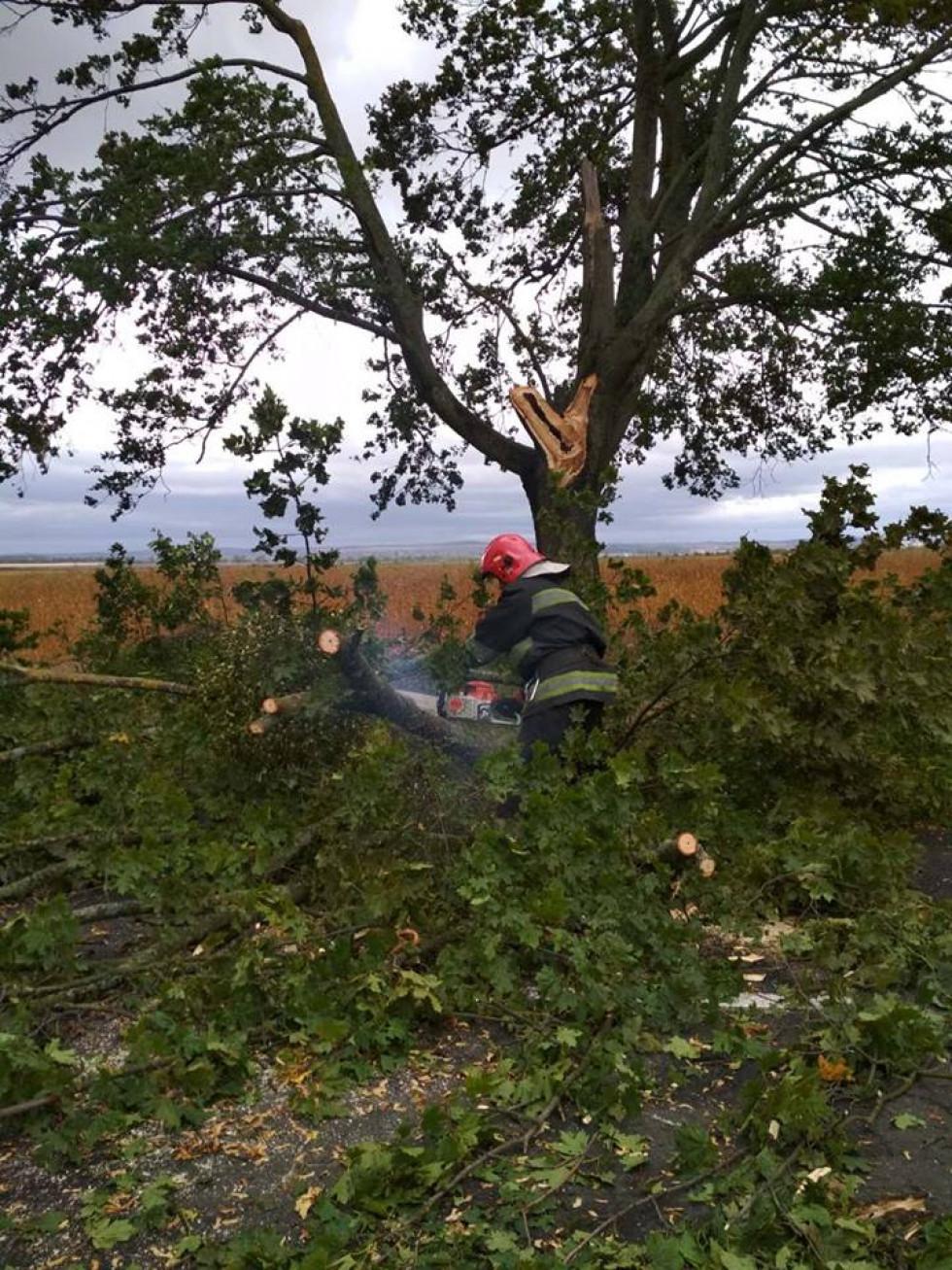Рятувальники очищають дороги від повалених дерев