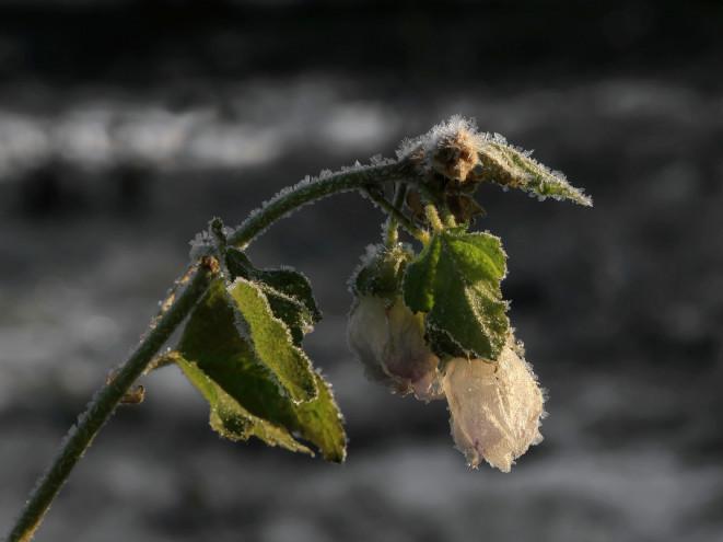 У Корці буде ясна погода,можливі сильні заморозки (до 5°с морозу у повітрі)