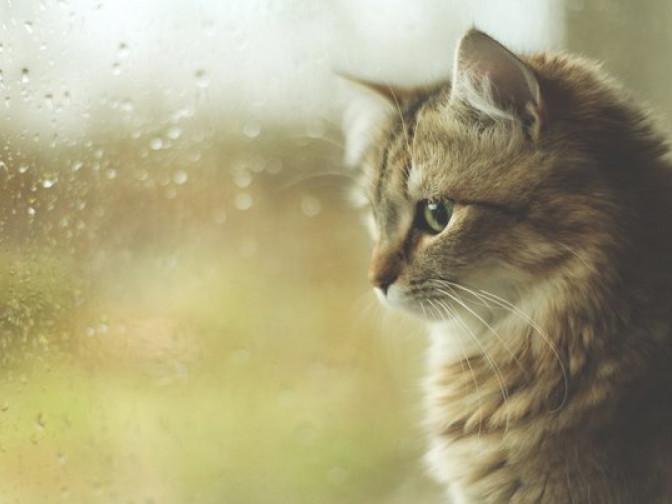 У Корці буде похмуро і пройде дощ