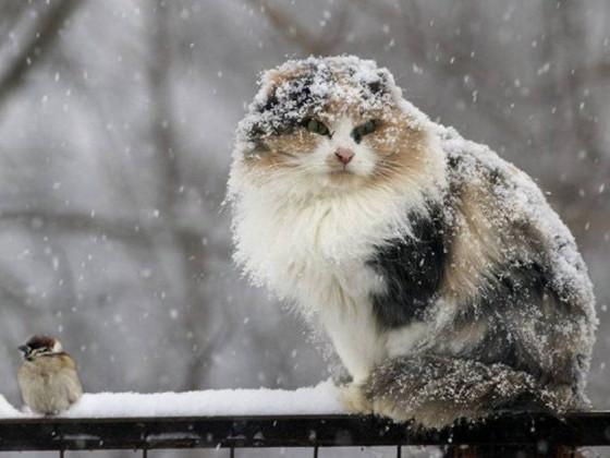У Корці пройде мокрий сніг