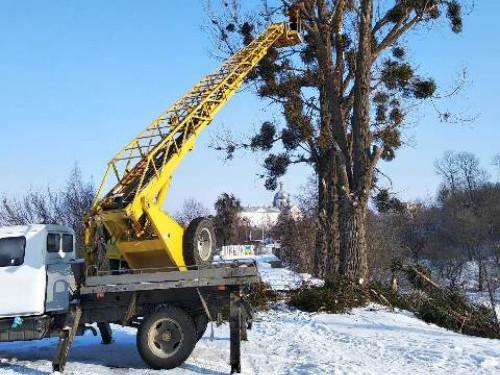 У Корці обрізають дерева